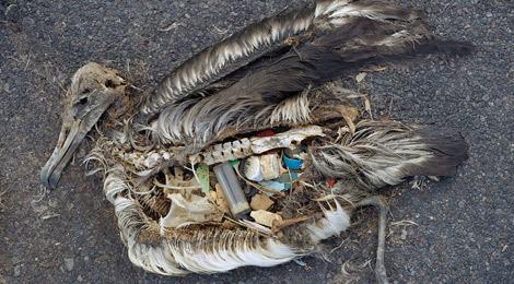 jordan_oiseau_mort_dechet_plastique