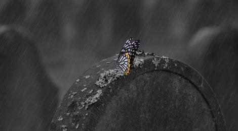 Papillon sur une tombe