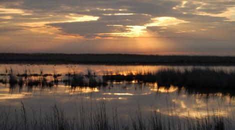 La SNPN son combat pour les zones humides
