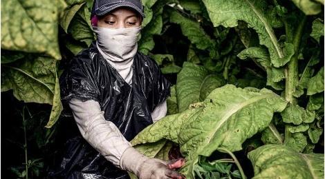 tabac-travail-enfants-santé