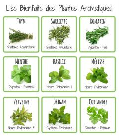 herboristerie_plantes_aromatiques