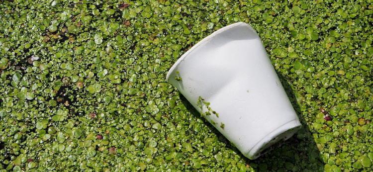 L'enjeu des emballages biodégradables en 2020